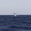 《クジラが爆発?》福岡県沖にクジラの死骸が漂着