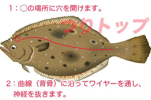 ヒラメの画像 p1_39