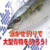 《釣りの仕掛け》泳がせ釣りで、大型青物を釣ろう!