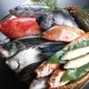 魚の体脂肪計で脂の乗り具合測定 兵庫・明石のメーカー開発
