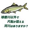 《鮎釣り初心者》球磨川以外で尺鮎が狙える河川はありますか?