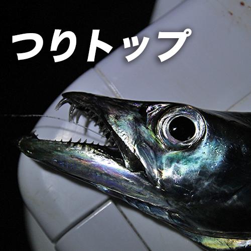 【初心者でも、よくわかるタチウオ】ウキ、ルアーの釣り方や仕掛けを紹介