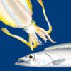 【秋のルアー釣り】初心者にオススメのターゲット、ワンタックルで狙うアオリイカ&タチウオ