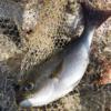 【夏の釣り】真夏の磯で釣れる魚&釣り方を教えて!