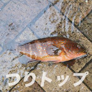 キジハタ01
