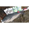 【釣り動画】これは凄い! 1.5号ハリスで、52cmグレを釣る