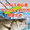 【初心者でもよくわかるシーバス攻略】タックル、釣り方など総まとめ!!!