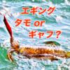 【アオリイカのエギング】タモorギャフ、どっちがおすすめ?