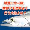 【ワインド、ルアー】時合いは一瞬、数釣りを効率よく行う方法とは?