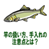 【鮎釣り初心者】竿の扱い方、手入れの注意点とは
