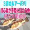 【3月のルアー釣り】初心者が手軽に狙える魚&釣り方を紹介