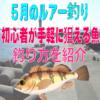 【5月のルアー釣り】初心者が手軽に狙える魚&釣り方を紹介