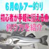 【6月のルアー釣り】初心者が手軽に狙える魚&釣り方を紹介