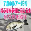 【7月のルアー釣り】初心者が手軽に狙える魚&釣り方を紹介