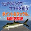 【ルアー初心者必見!】ショアジギングでサワラを狙う、ポイント&タックル、釣り方を解説