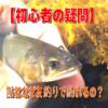 【初心者の疑問】鮎はなぜ友釣りで釣れるの?
