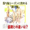 【鮎釣り】落ち鮎シーズンに釣れる「錆び鮎」、盛期の鮎との違いは?